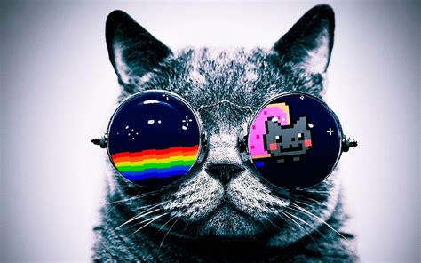 iphone wallpaper cat glasses nyan cat cats glasses