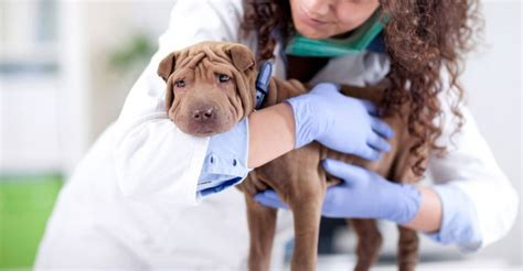 mansioni assistente alla poltrona corsi per assistente veterinario corsiprofessionali top