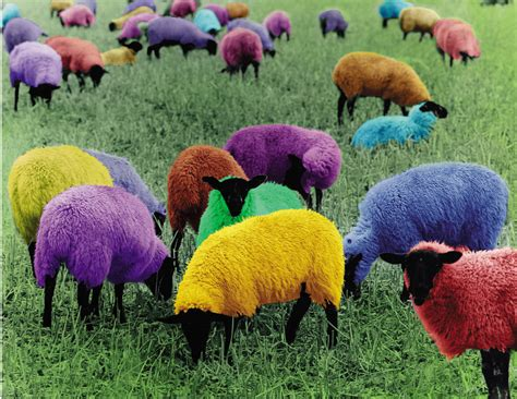 colored sheep photographic poster multicolored sheep quot pullover farm quot ebay