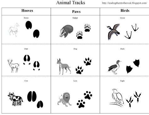 footprints 4 activity book leading them to the rock animal study animal tracks
