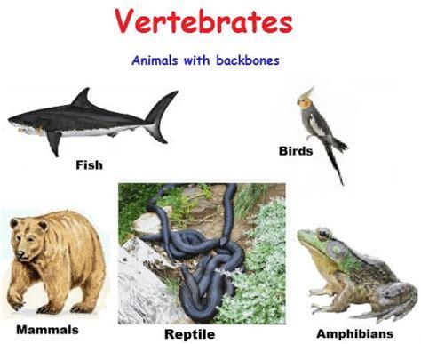 definition of animal biology vertebrates definition vertebrate characteristics