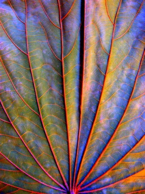 patterns in nature rainbow dry leaf by arina jansen van vuuren colours of rainbow