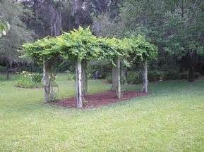 How to build a sturdy grape arbor thumbnail