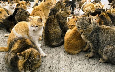 imagenes animales extraños gatos muertos imagenes con gatos muertos perros colgados