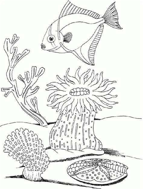 coloring pages underwater undersea coloring pages coloring home