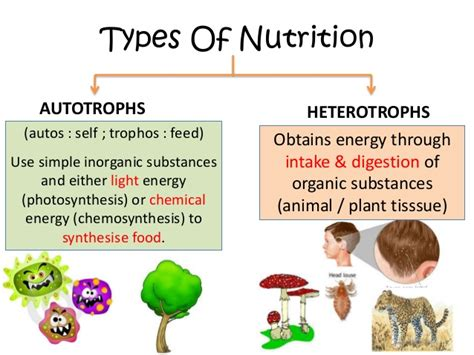 6 Types Of Diet Which Ones Right For You by 2eso Review Autotrophic Nutrition Versus Heterotrophic