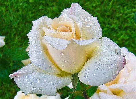 Beleza Da Natureza Fotos E Imagens | cria 231 245 es divinas a beleza da natureza envolvente nas