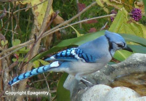 Sparrow Bird House Images