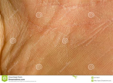 up human skin macro epidermis texture stock image search photos and photo clip skin texture stock image image of caucasian wrinkle 29778541