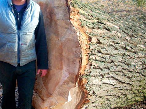 Was Kostet Ein Baum 4662 by Baum Fllen Schnitt Simple Mit Den Kosten Fr Das Grundstck