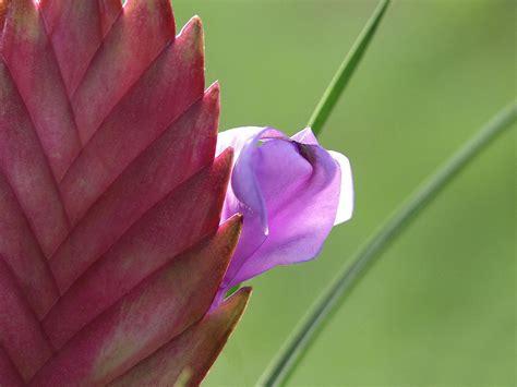 fiore pianta grassa pianta grassa foto immagini piante fiori e funghi