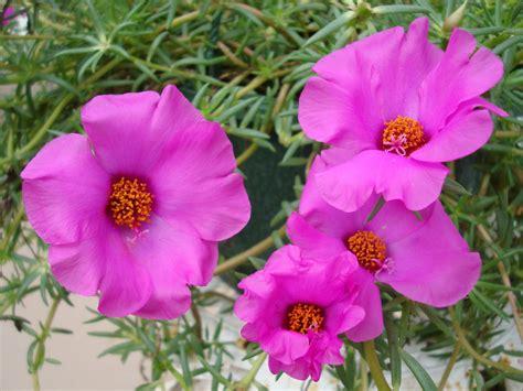 imagenes gratis flores exoticas flores bell 237 simas y ex 243 ticas fondos de escritorio