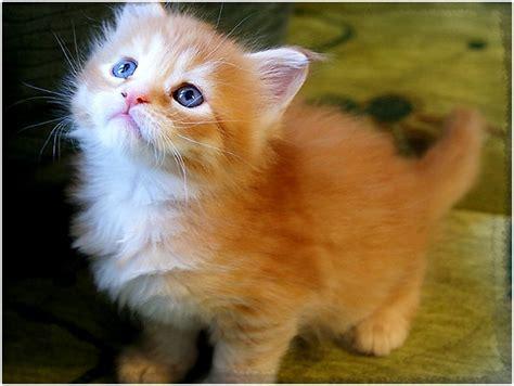 imagenes gatitos hermosos im 225 genes de gatitos bonitos y chiquitos archivos gatitos