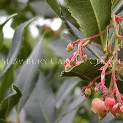 Trixie Fruit Soap Strawberry Trixie Sabun Buah Strawberry 16 arbutus unedo strawberry tree