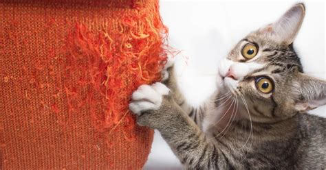 How To Keep Cats Sofa by 5 Ways To Keep Your Cat From Clawing The Furniture The