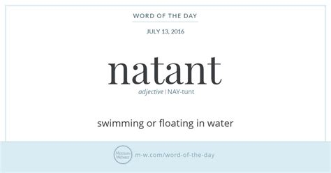 is quos a scrabble word word of the day natant merriam webster