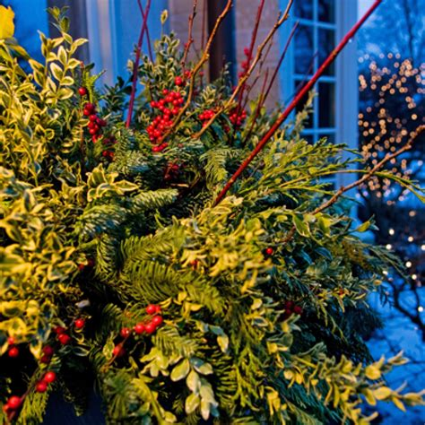 holiday outdoor decorating tips  mariani landscape traditional home