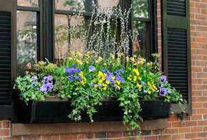 Best Window For Plants Plants Flowers For Window Boxes With Pictures Ehow