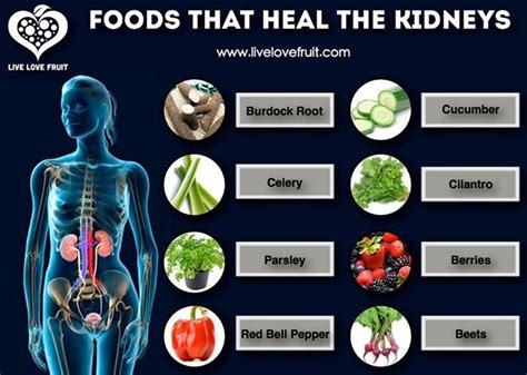 Foods To Detox Liver And Kidneys by Foods That Heal The Kidneys Cures Medicine And