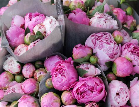 Black Friday Home Decor Deals by Sarah Tucker Saturday Morning Peonies And Pomponella S