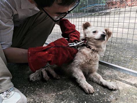 animal activists   terrorists
