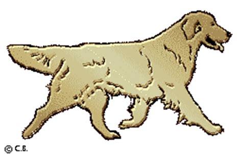 hilltop golden retrievers hilltop golden retrievers goldendoodles terriers