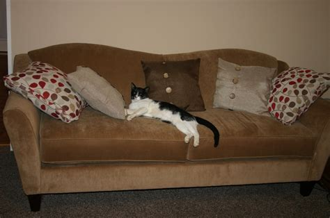 cat couches couch cat smile pinterest