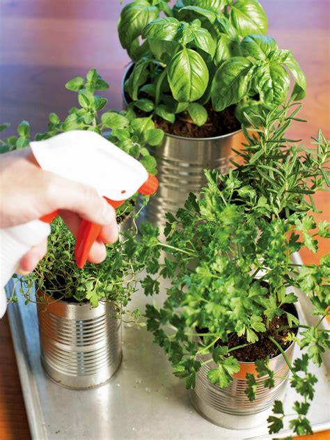 kitchen herb garden ideas grow your own kitchen countertop herb garden hgtv