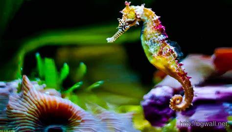colorful seahorse colorful seahorse wallpaper hd