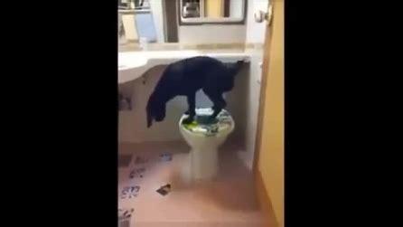 donne in bagno a fare pipi cosa succede quando tratteniamo la pip 236