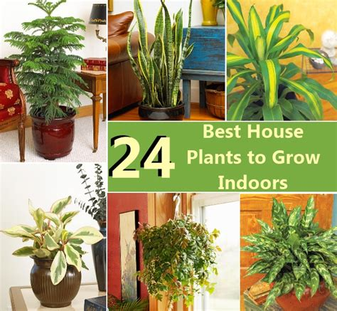 best home plants 24 best house plants to grow indoors diy cozy home world