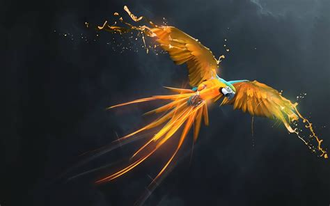 wallpaper hd for desktop themes macaw parrot hd wallpapers macaw pictures hd images hd