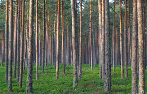 the wood for the trees one s view of nature books seeing the financial wood from the money trees