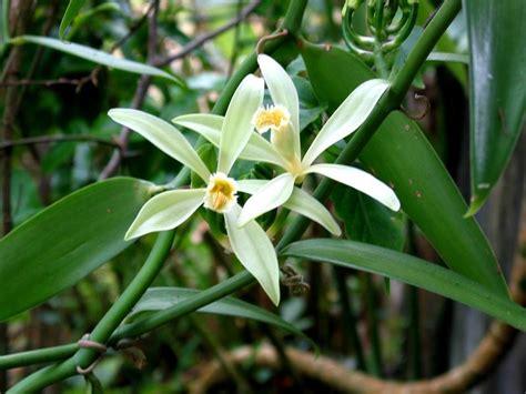orchids animalcsi s blog