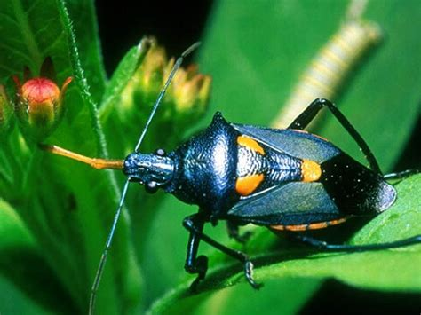 colorful bugs colorful bugs colorful bugs beetles slideshow