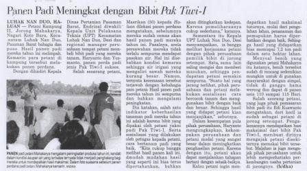 Bibit Jagung Manis Pertiwi panen padi meningkat dengan bibit pak tiwi 1 benih pertiwi