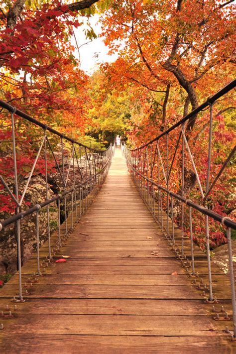 bridge   fall pictures   images