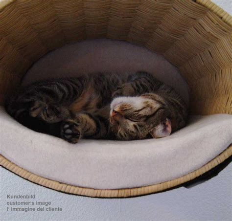 Sleep Max Matrass Tree Colour 80x180x4cm modern cat scratcher rondo a unique cat condo tree and