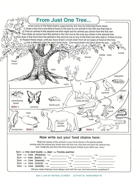 Ecosystems Worksheet by Principles Of Ecology Worksheet Answers Worksheets