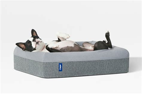 dog mattress bed sweet dreams are made of these casper introduces a dog
