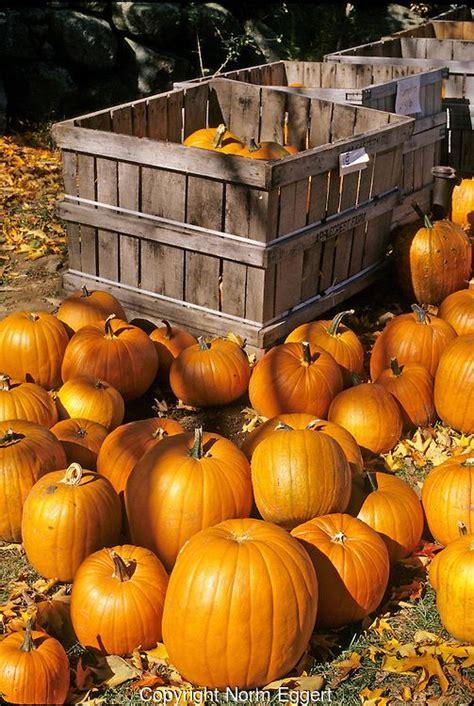 112 best images about pumpkin patches on pinterest
