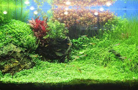 decoracion acuario c 243 mo decorar un acuario maskokotas