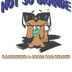 dachshund puppies tucson not so grande dachshund small rescue closed tucson az yelp
