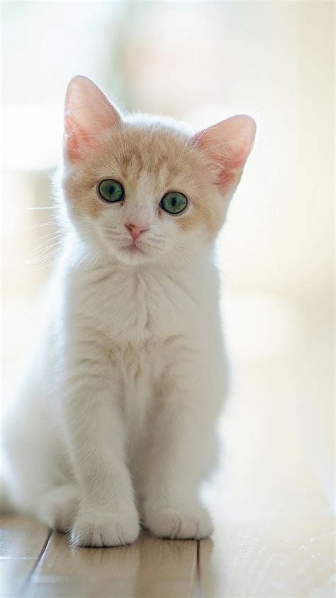 wallpaper for iphone cat 60 cute animals iphone wallpapers you would love to download