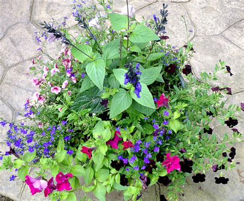 hometalk 17 hanging flower basket tips tricks and