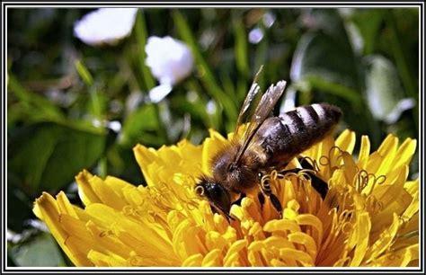 bienen im garten bienen im garten ansiedeln page beste wohnideen
