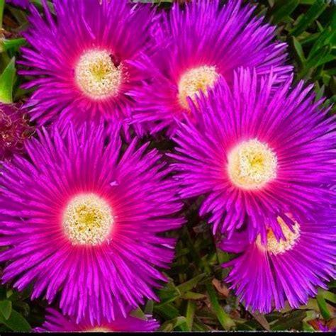 imagenes flores maravillas maravillas flores moradas alhambra ciudad real