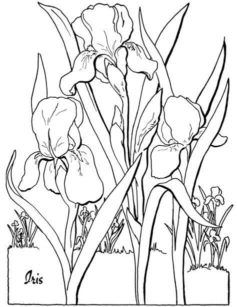 free coloring pages of adult fairy