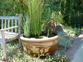 Water Gardening In Containers - container gardening sa greenfingers