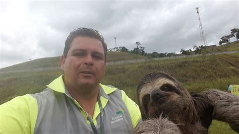 por  fazer selfie  bicho preguica  uma crueldade portal dos animais